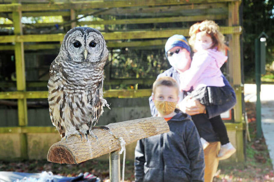 Chili the barred owl is the center of attention for the McKinney family, of Edwardsville, including Nolan, 9, and Vail, 2, at the Owl-O-Ween event at TreeHouse Wildlife Center. Photo: David Blanchette|For The Telegraph