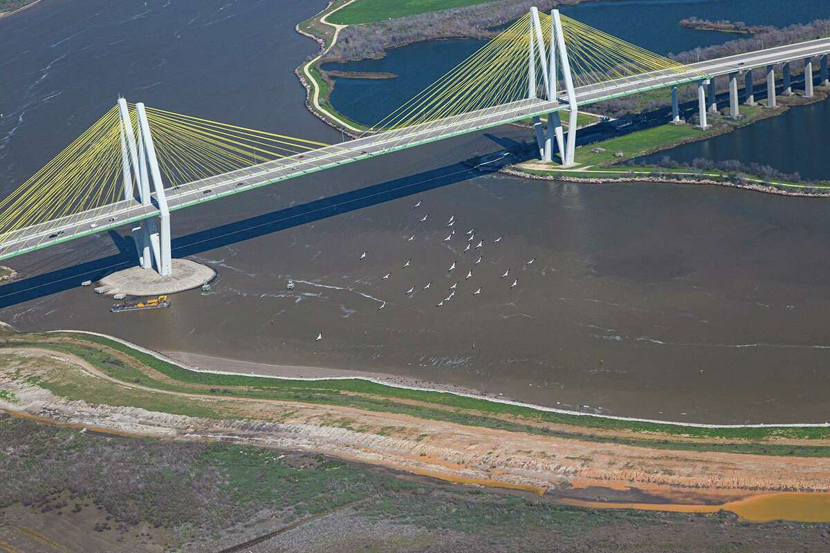 A flock of American white pelicans flies near the Fred Hartman Bridge and the Houston Ship Channel. Watch for the large birds in the Texas skies this winter.