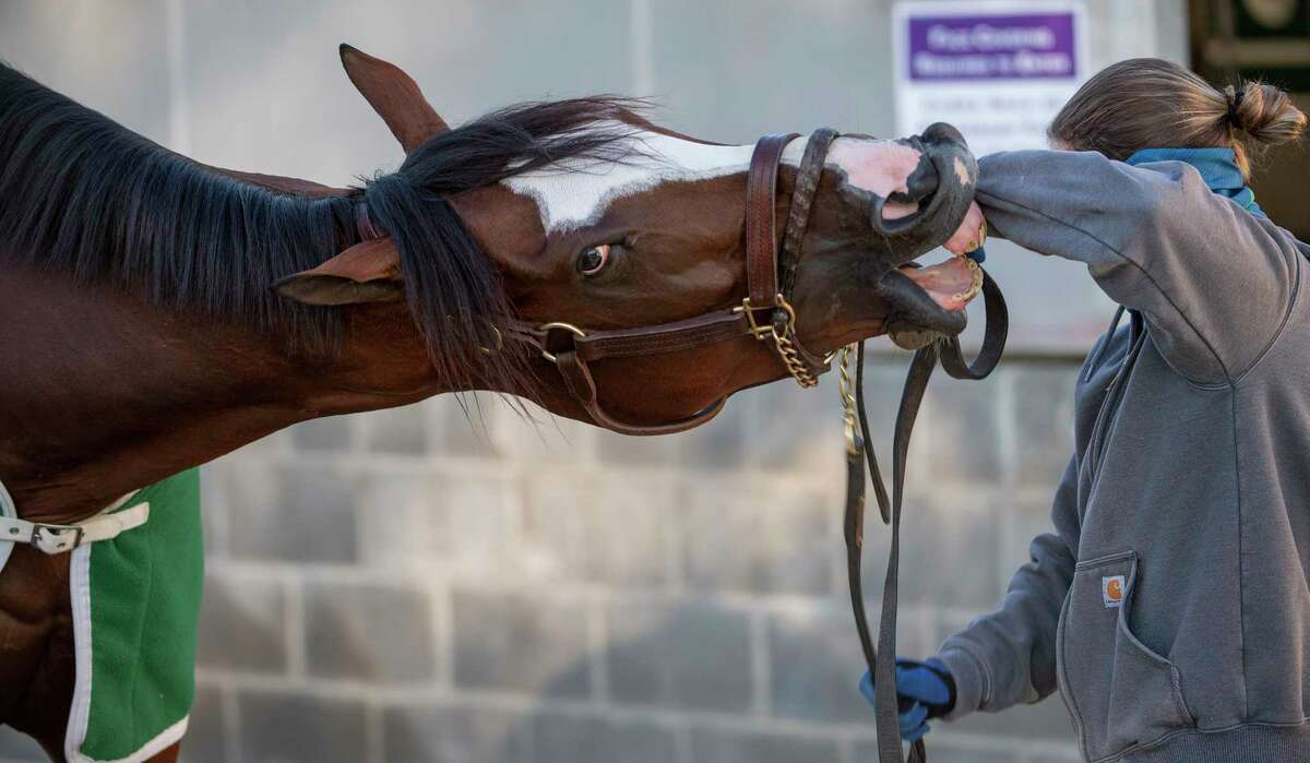 Tiz the Law gets frisky with exercise rider Heather Smullen at Keeneland Race Course Monday Nov. 2 2020 in Lexington, KY. Photo by Skip Dickstein