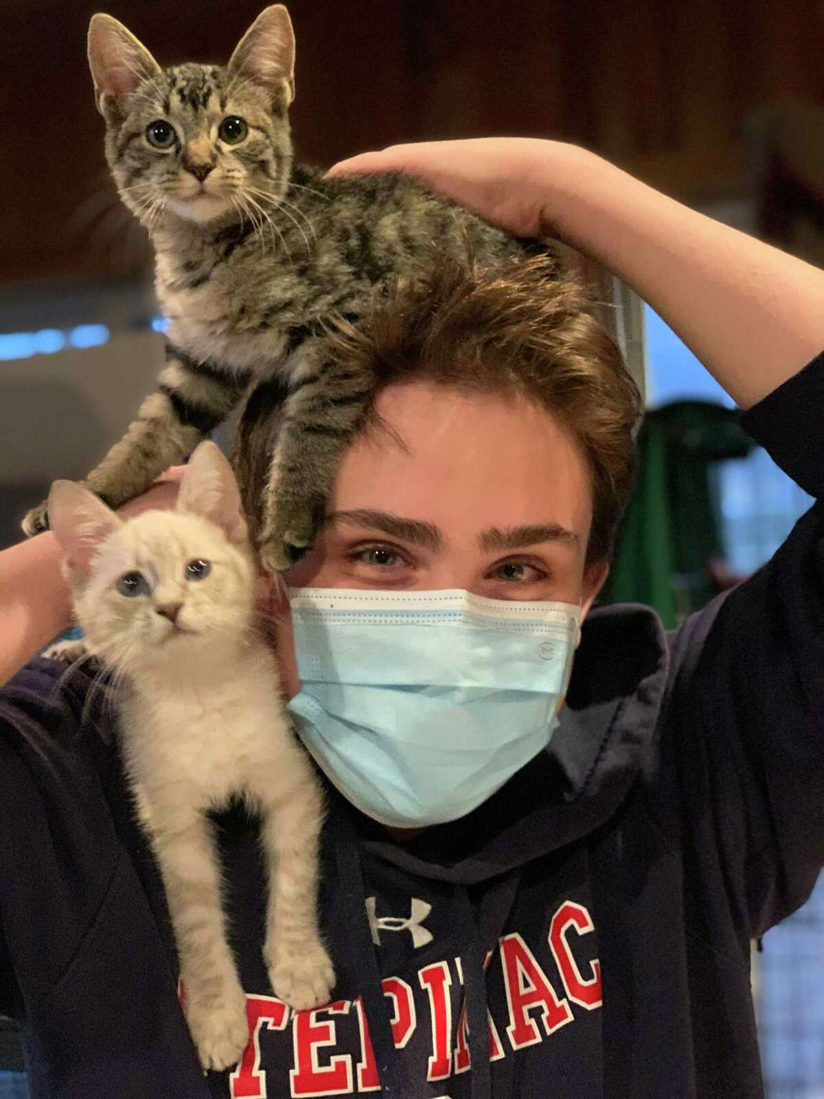 Anthony Raduazzo loves cats, and they seem to love him. He helps transport them from shelters that often euthanize them to shelters dedicated find them homes.