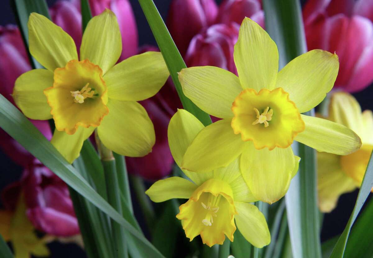 Plan now for spring daffodils and tulips.