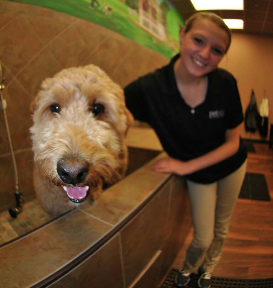 A file photo of a Goldendoodle in the washing station at a Pet Valu store in Norwalk, Conn. On Nov. 4, 2020, Pet Valu announced it would close all U.S. stores, including nearly 30 in Connecticut, as store sales were squeezed during the COVID-19 pandemic. Photo: Jordan Osterhout / For The Norwalk Hour / Norwalk Citizen