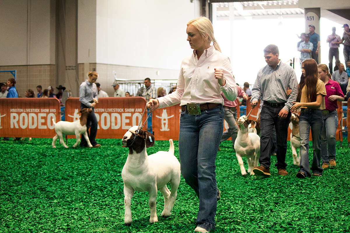 The Houston Livestock Show and Rodeo on Thursday announced plans for the 2021 Junior Livestock Show.