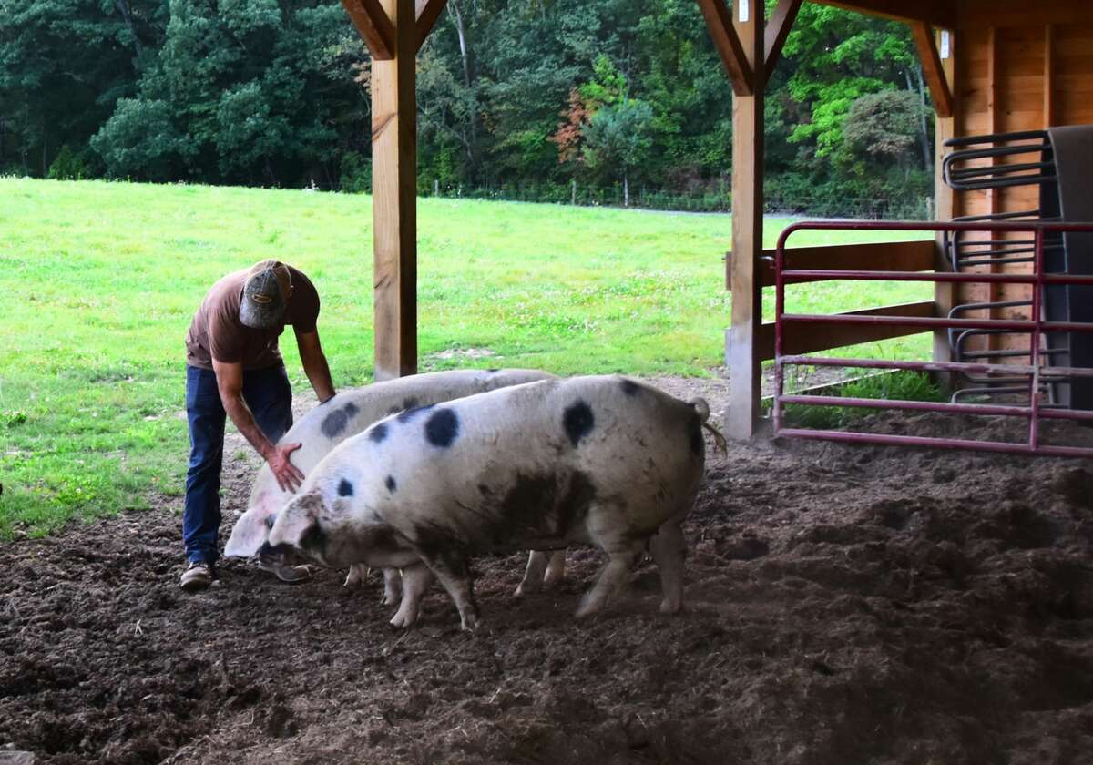 Matt Baumgartner, owner of June Farms in West Sand Lake, greets the farms' Gloucestershire Old Spots sows, named Lucy and Ethel, in a file photo from 2017. (Steve Barnes/Times Union)