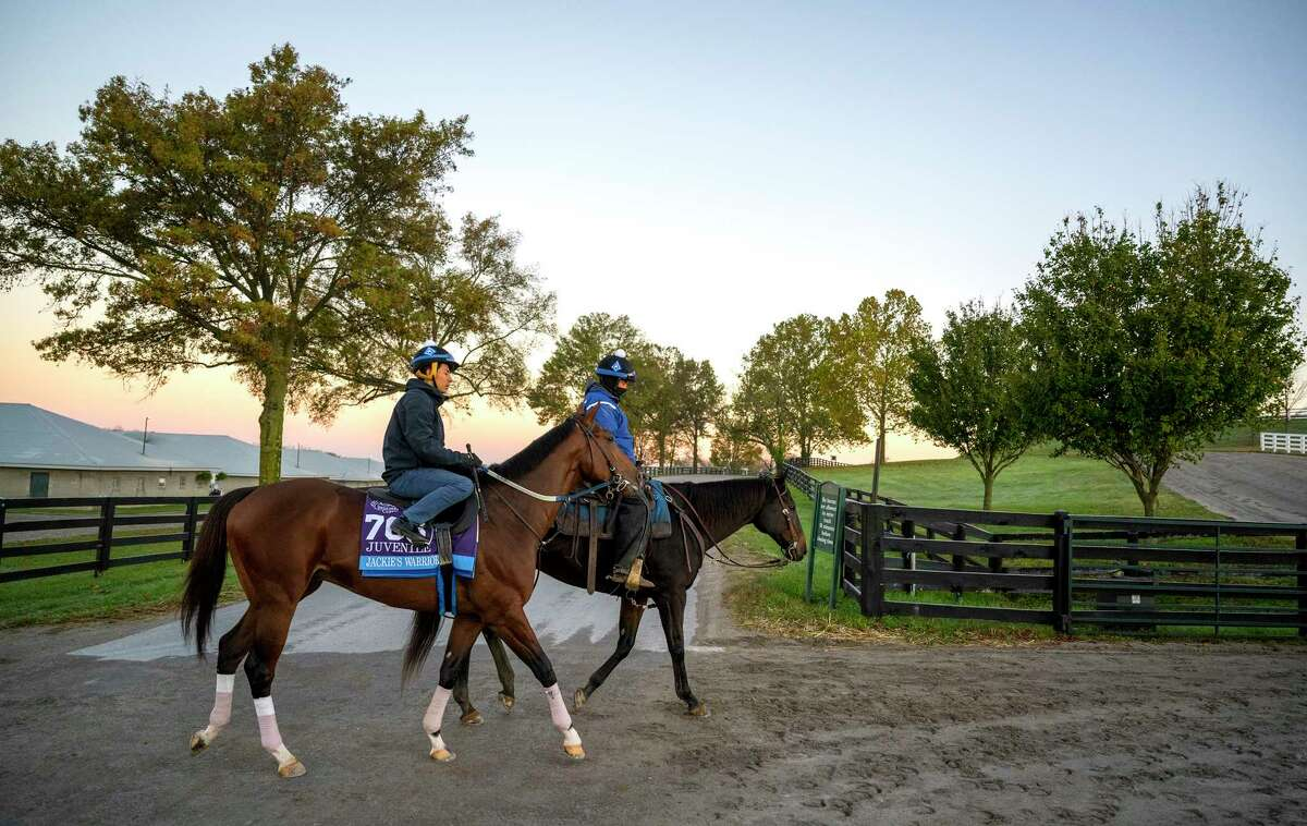 Breeders' Cup entrant Jackie's Warrior heads to the track for a gallop this morning at Keeneland Race Course Oct. 31, 2020 in Lexington, Ky. (Skip Dickstein / Special to the Times Union)
