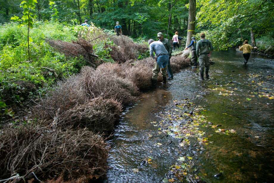 Trout Unlimited's Nutmeg Chapter is raising money to help restore a section of the Mill River in Fairfield. Photo: Contributed Photo /