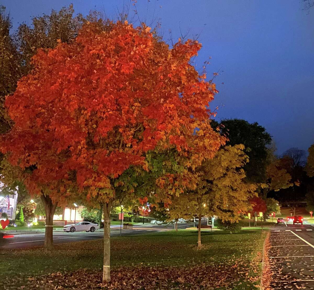 During fall, nature gets painted with warm hues of red, yellow, and brown. Different types of trees have evolved differently shaped leaves to help give them subtle advantages over one another.