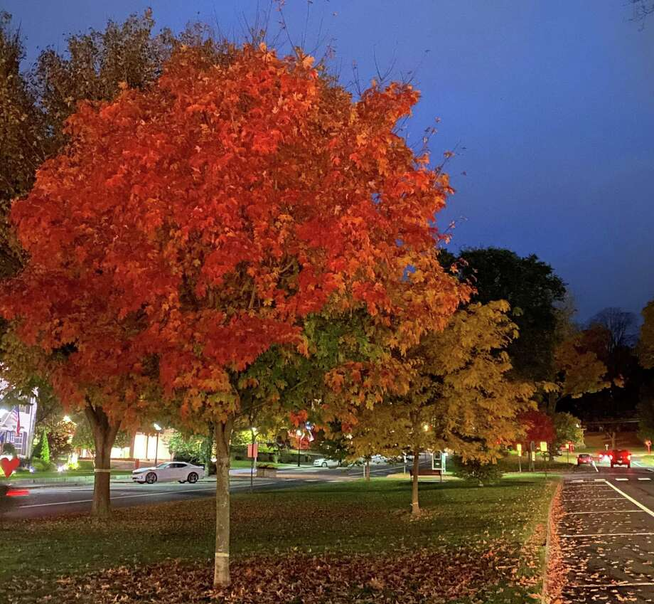 During fall, nature gets painted with warm hues of red, yellow, and brown. Different types of trees have evolved differently shaped leaves to help give them subtle advantages over one another. Photo: Deborah Rose /Hearst Connecticut / / Danbury News Times