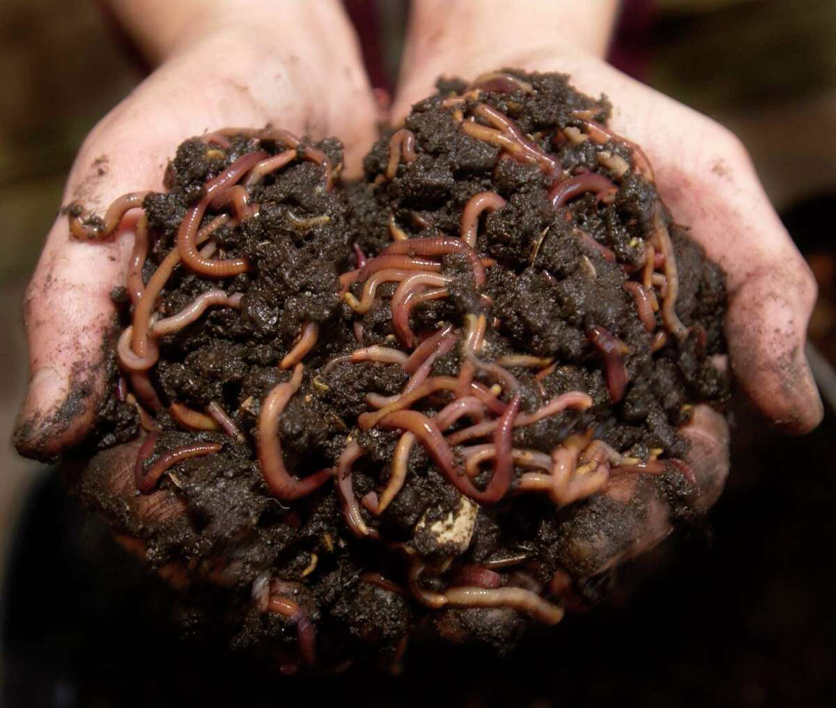 Worms require moist soil to survive.