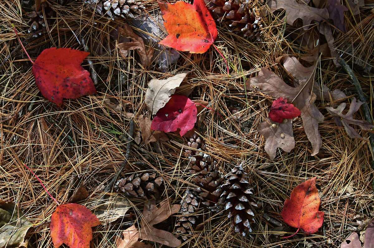 Colorful fallen leaves, pine needles and pine cones blanket the ground Oct. 12 at Saratoga Spa State Park in Albany, New York.