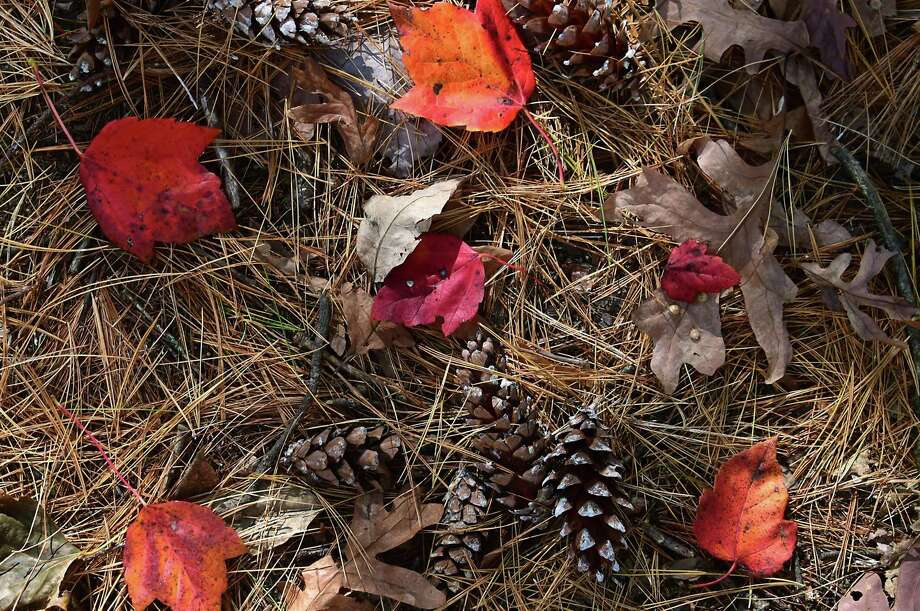 Colorful fallen leaves, pine needles and pine cones blanket the ground Oct. 12 at Saratoga Spa State Park in Albany, New York. Photo: Lori Van Buren / Albany Times Union / 40050072A