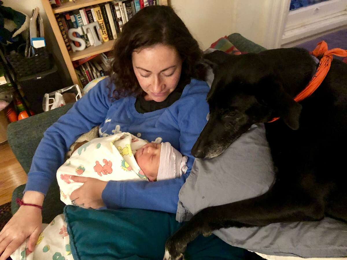Culture Desk editor Sarah Feldberg with her daughter Simone and dog Samba on their first night home from the hospital.