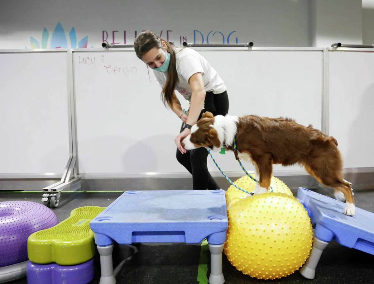 Dog trainer Jessica Dempsey works with Millie at Believe in Dogs, a dog training and day care facility in Houston on Thursday, Nov. 5, 2020. The Heights business has doubled its staff since COVID-19 hit and added 10 new classes during the week to accommodate all the demand