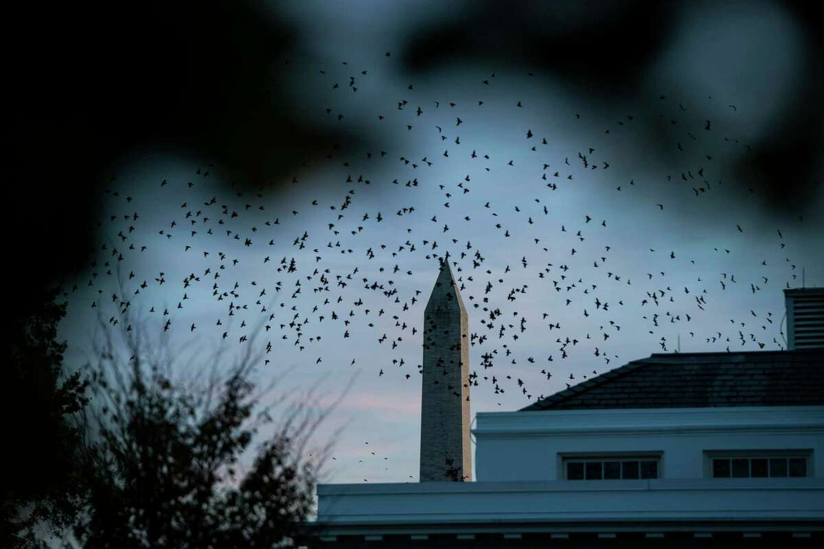 Birds fly near the West Wing and the Washington Monuent on Thursday as President Trump and his advisers awaited election results. That wait has continued into Friday as the counting process goes on.