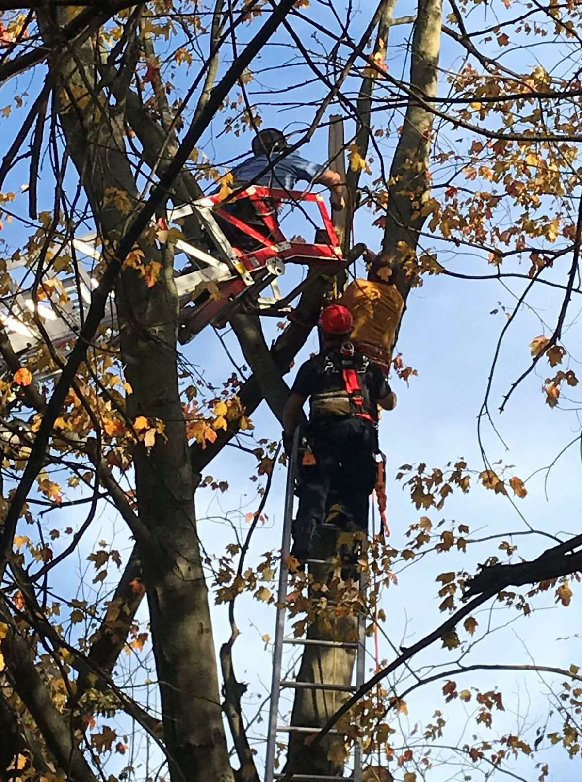 Firefighters work high above Beacon View Drive in Fairfield Saturday, Nov. 7, to reach two trapped tree workers.