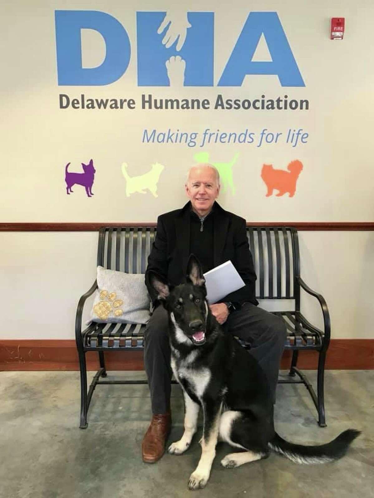 Joe Biden adopted foster dog Major at the Delaware Humane Association in November 2018.
