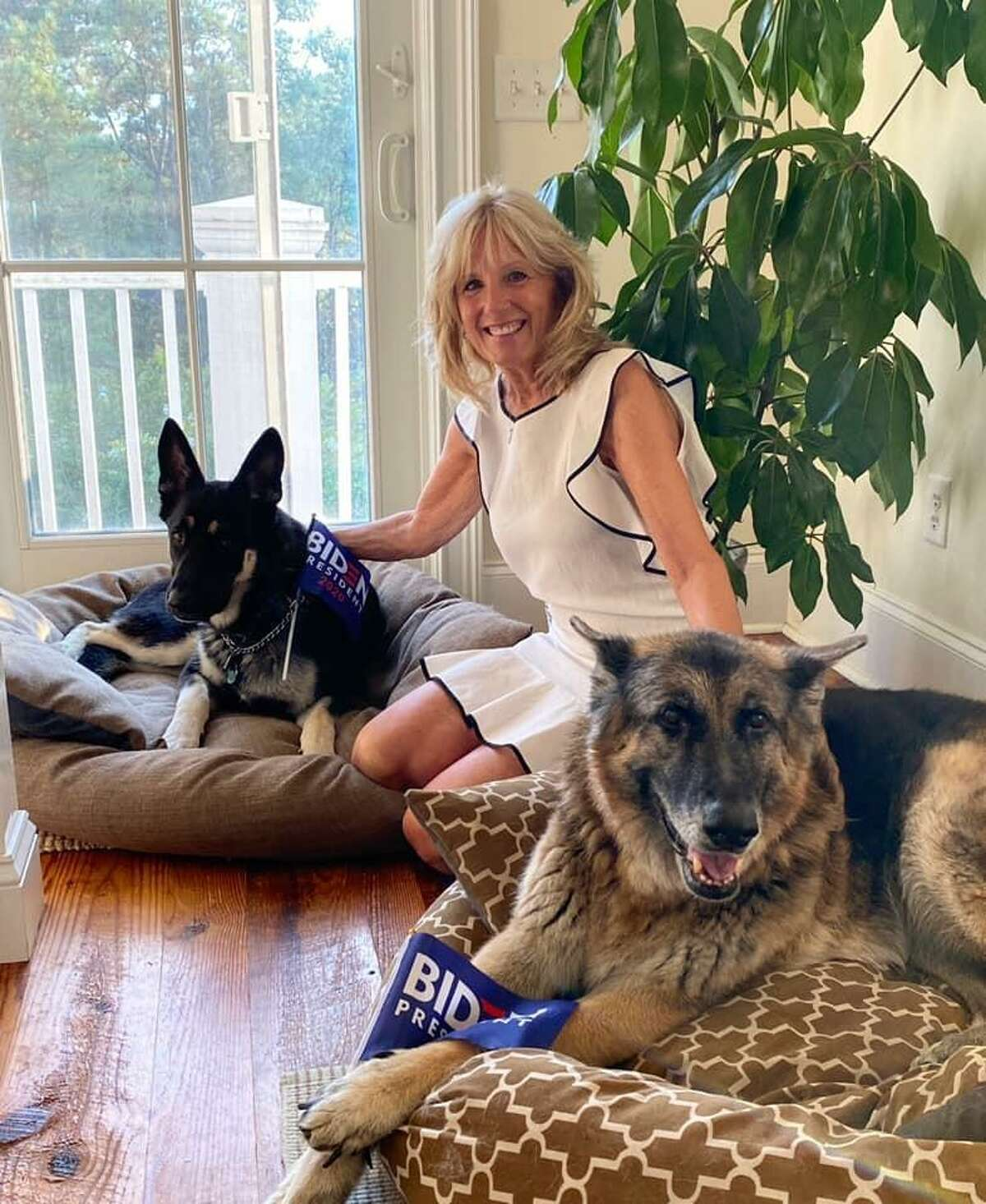 Jill Biden with the family's German shepherds, Major (left) and Champ.