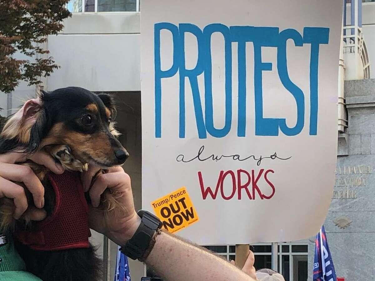 A man and his dog celebrate Joe Biden's win outside the Philadelphia Convention Center Saturday.