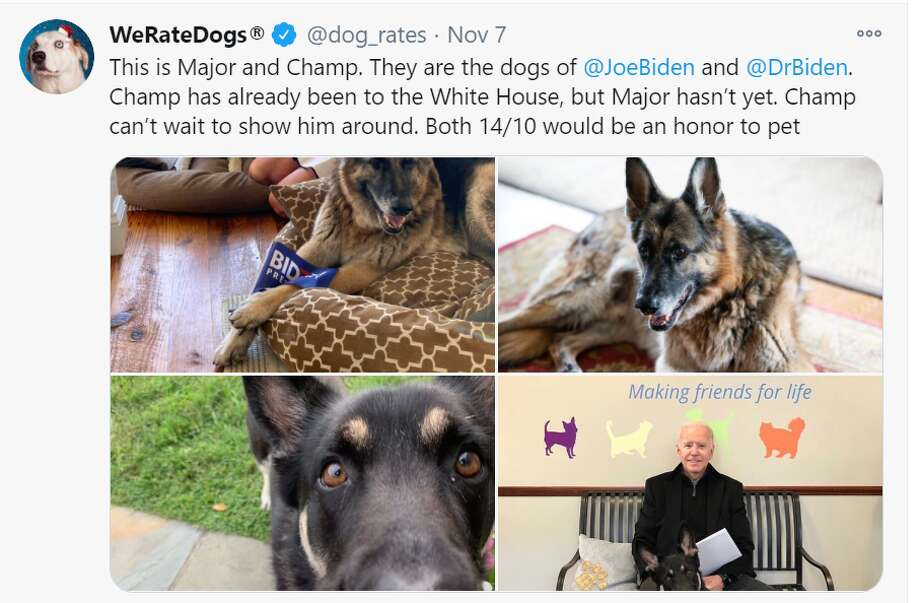 President-elect Joe Biden and his wife Jill Biden will be bringing their two German shepherds to the White House. Photo: Screenshot Twitter