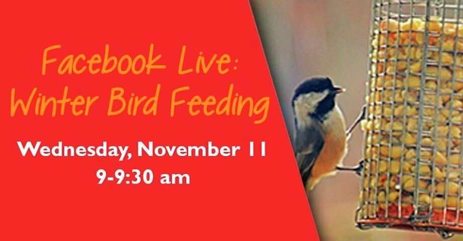 Wednesday, Nov. 11: Winter Bird Feeding Facebook, hosted by the Chippewa Nature Center in Midland, is set for 9 to 9:30 a.m.(Photo provided/Chippewa Nature Center)