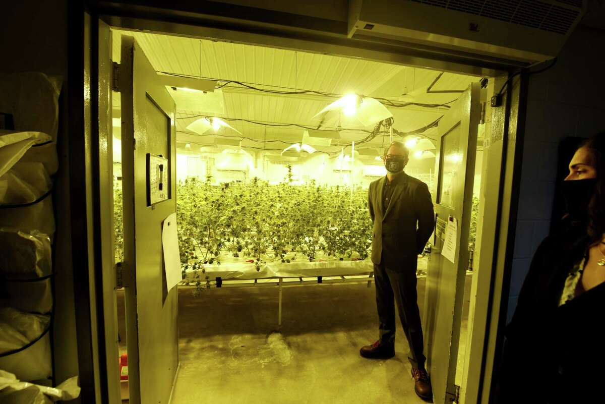 Dr. Stephen Dahmer, chief medical officer for Vireo Health, stands next to a crop of medical marijuana that is nearing harvest during a tour of Vireo Health's Fulton County production facility on Monday, Nov. 9, 2020, in Johnstown, N.Y. (Will Waldron/Times Union)