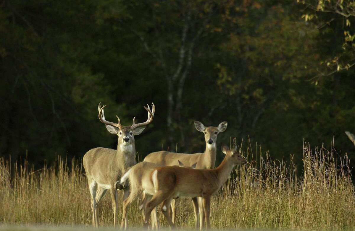 A new package of proposed deer regulations, for the 2021 fall deer hunting season, will be introduced to the Michigan Natural Resources Commission at its Nov. 12 meeting. (File Photo)