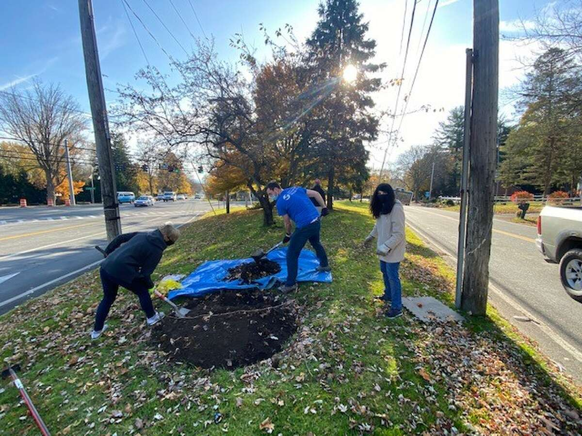Volunteers from the Greater Loudonville Association plant bulbs to beautify the Loudonville Triangle off Route 9. They are ramping up for the holidays- not down.