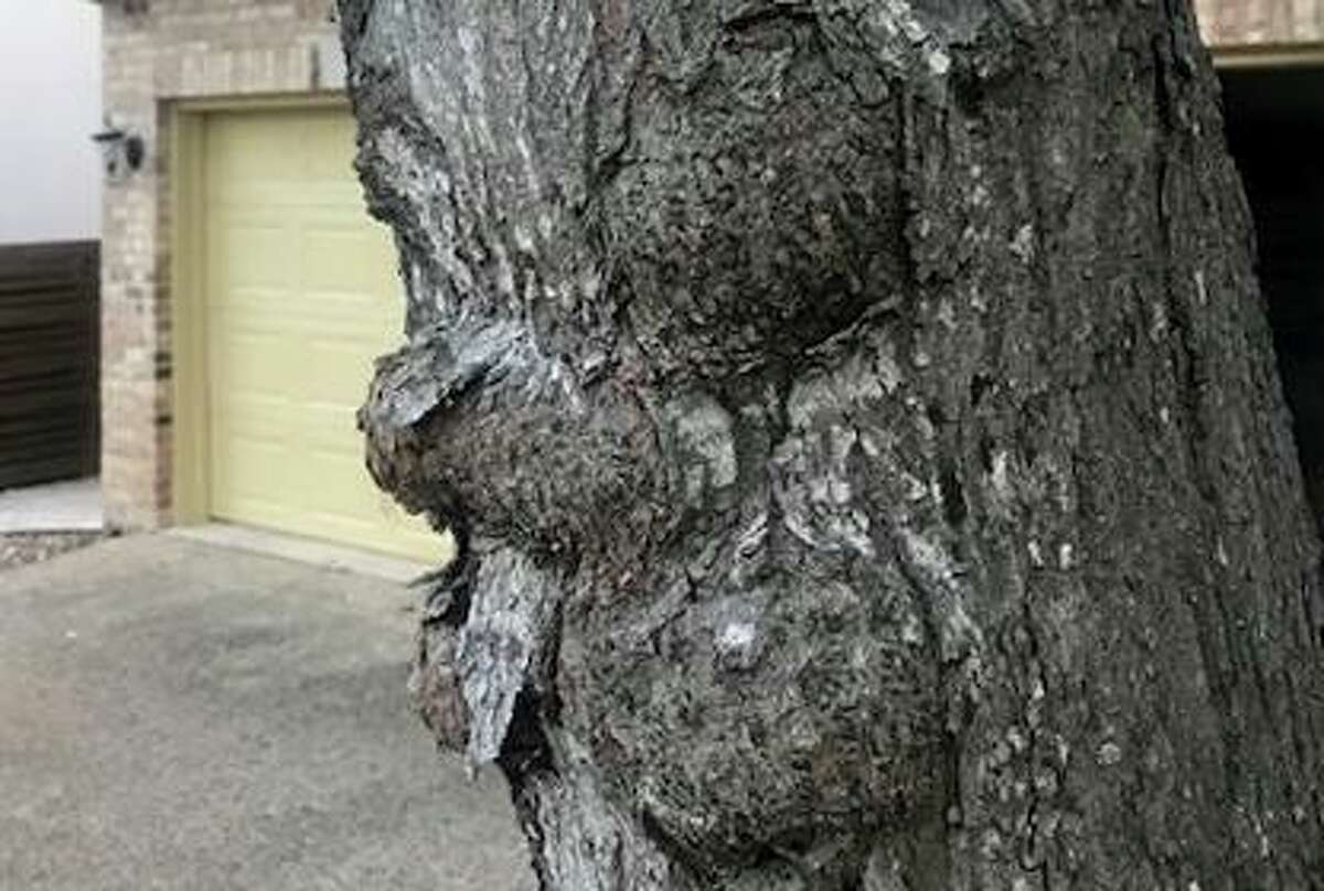 There isn't anything you can do to prevent or control burls. You can't prune to remove them. You just have to look at them.