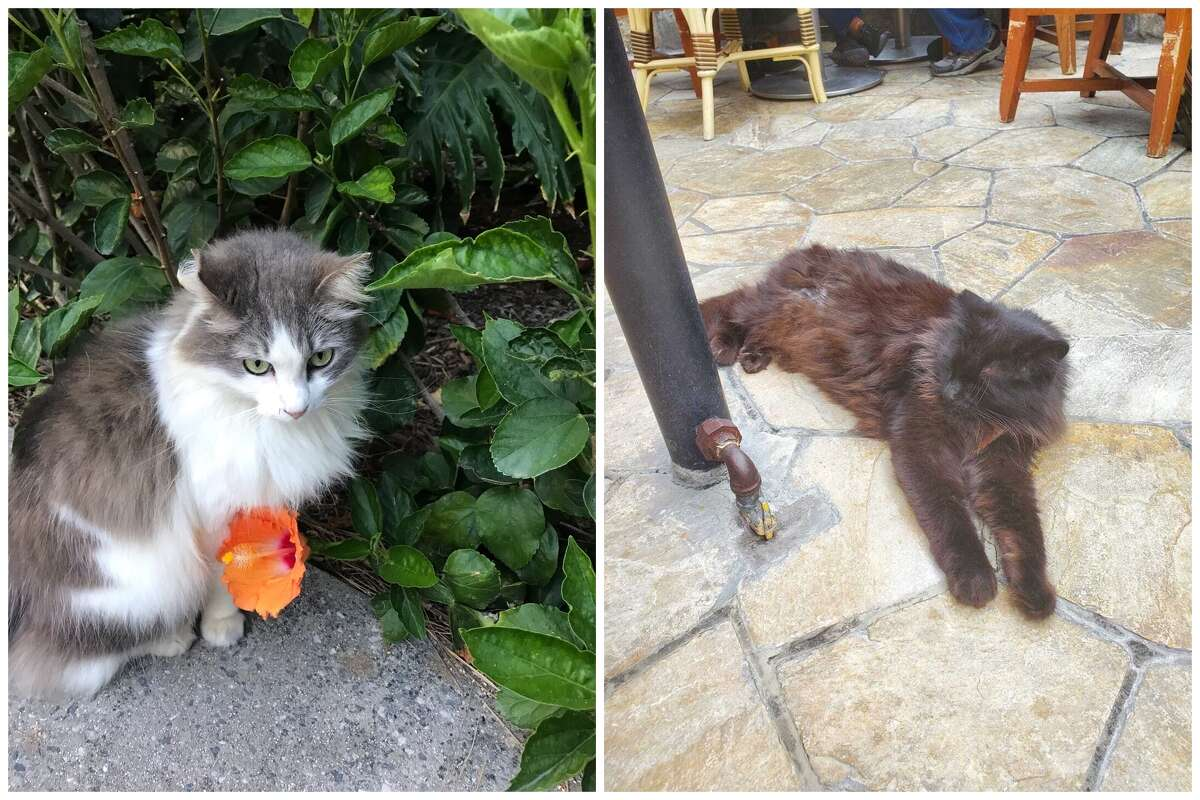 A cat at Trader Sam's Enchanted Tiki Bar (left), and at Tangaroa Terrace restaurant (right) inside the courtyard of the Disneyland Hotel