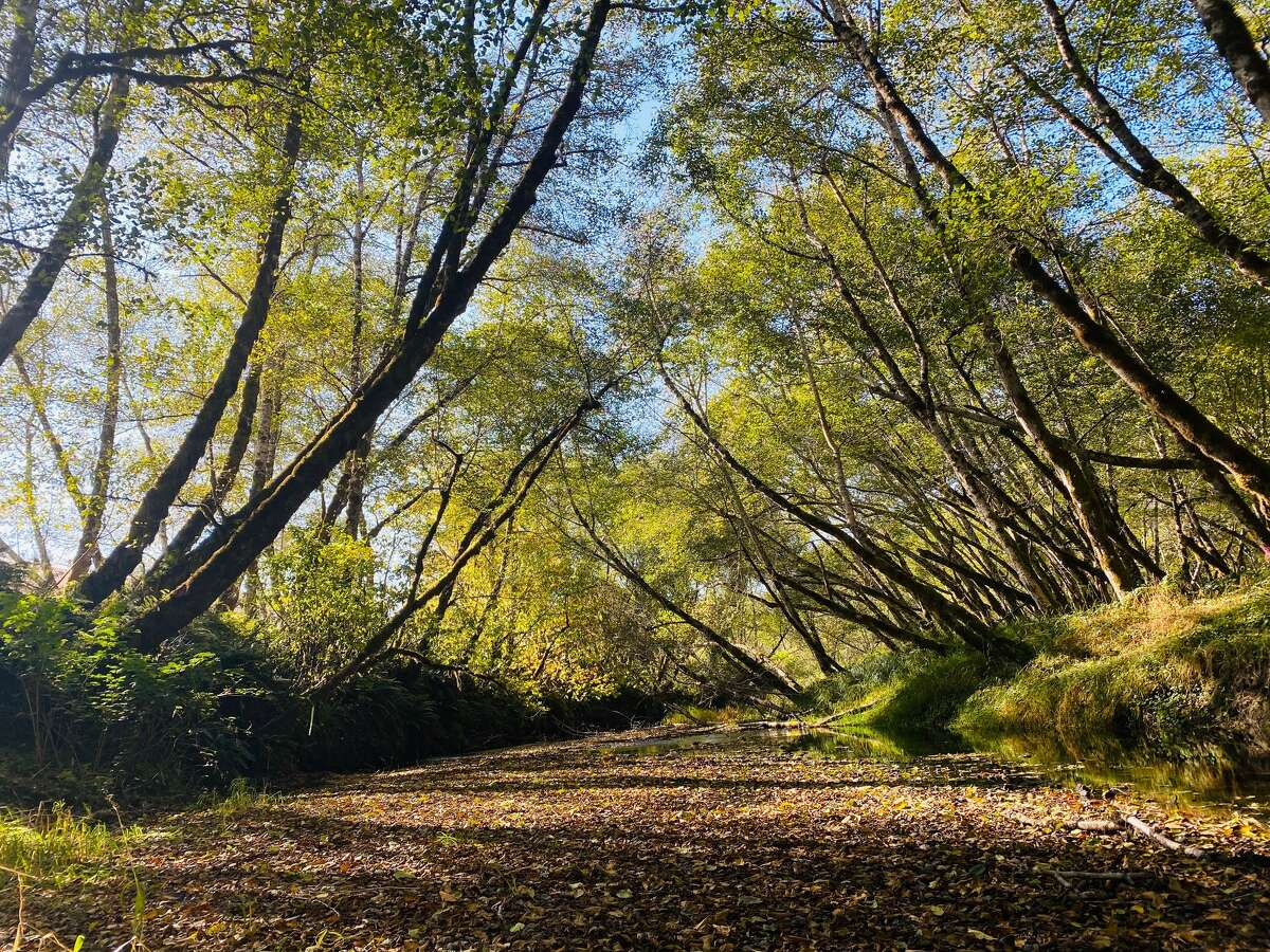 Part of forest bathing is to walk around slowly, taking note of what's moving.