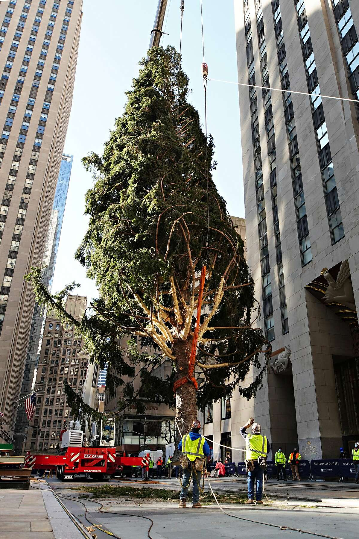 NEW YORK, NEW YORK - NOVEMBER 14: The Rockefeller Center Christmas Tree arrives at Rockefeller Plaza and is craned into place on November 14, 2020 in New York City. (Photo by Cindy Ord/Getty Images)