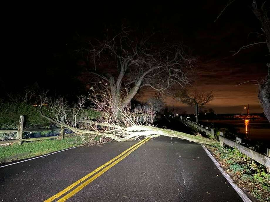 Trees and limbs down in Darien, Conn., on Nov. 15, 2020. Photo: First Selectman Jayme Stevenson / Contributed Photo