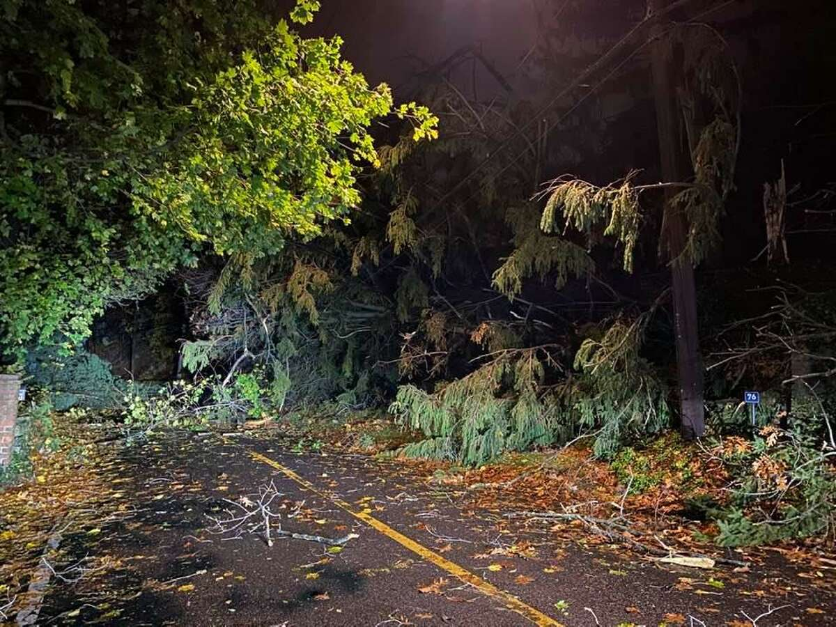 Trees and limbs down in Darien, Conn., on Nov. 15, 2020.