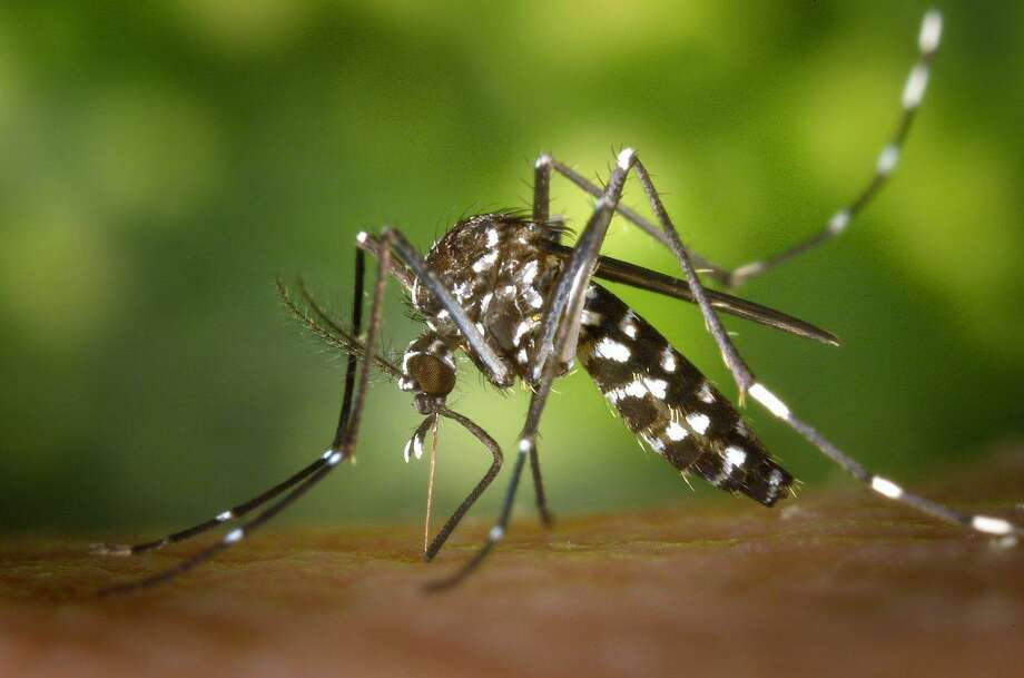 The Montgomery County Public Health District confirmed the first probable case of human West Nile Virus in Precinct 4, bringing the county's total case count of the virus to three this year. Photo: Centers For Disease Control