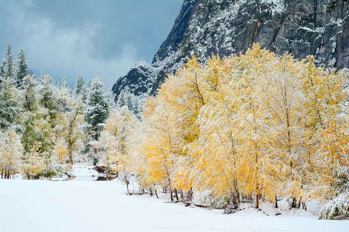 More fall foliage blanketed in snow.