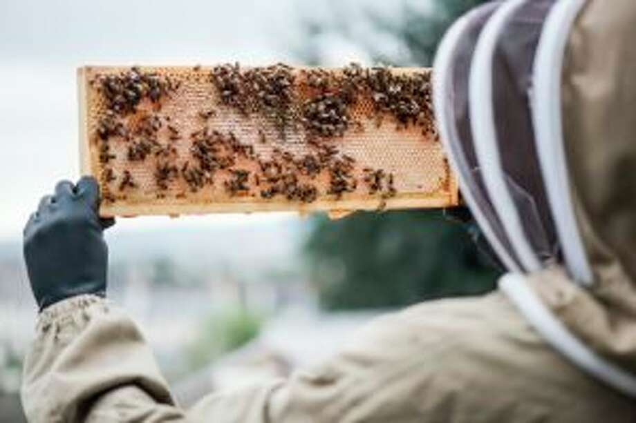While most bee keeping work is done during the warmer months, there are still a few things you can do to maintain your hive during the cold winter months, as well. (Submitted photo)