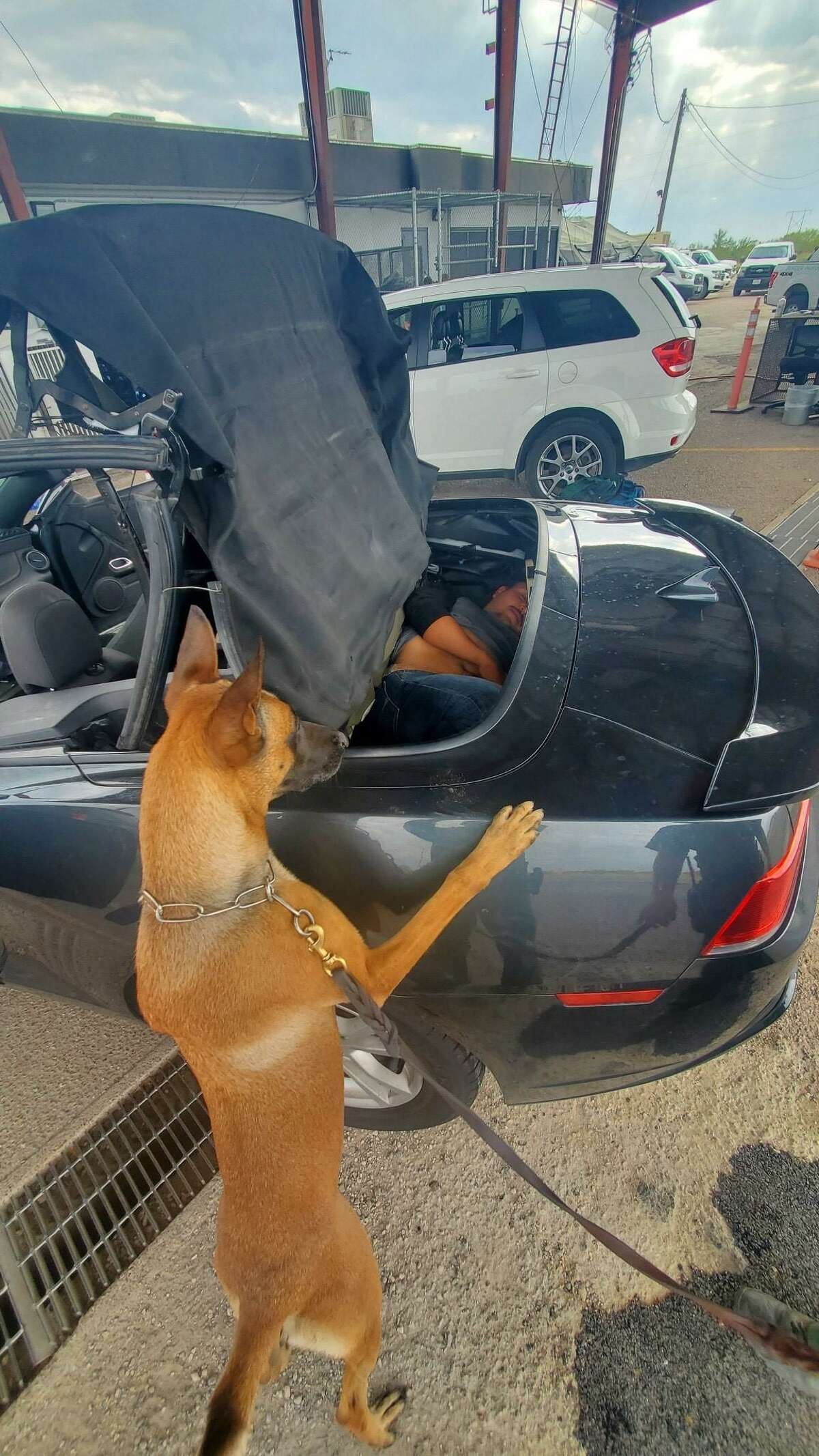 A U.S. Border Patrol K-9 unit alerts to a vehicle during an immigration inspection. An individual was found inside the compartment of a convertible. He was determined to be an immigrant who had crossed the border illegally.