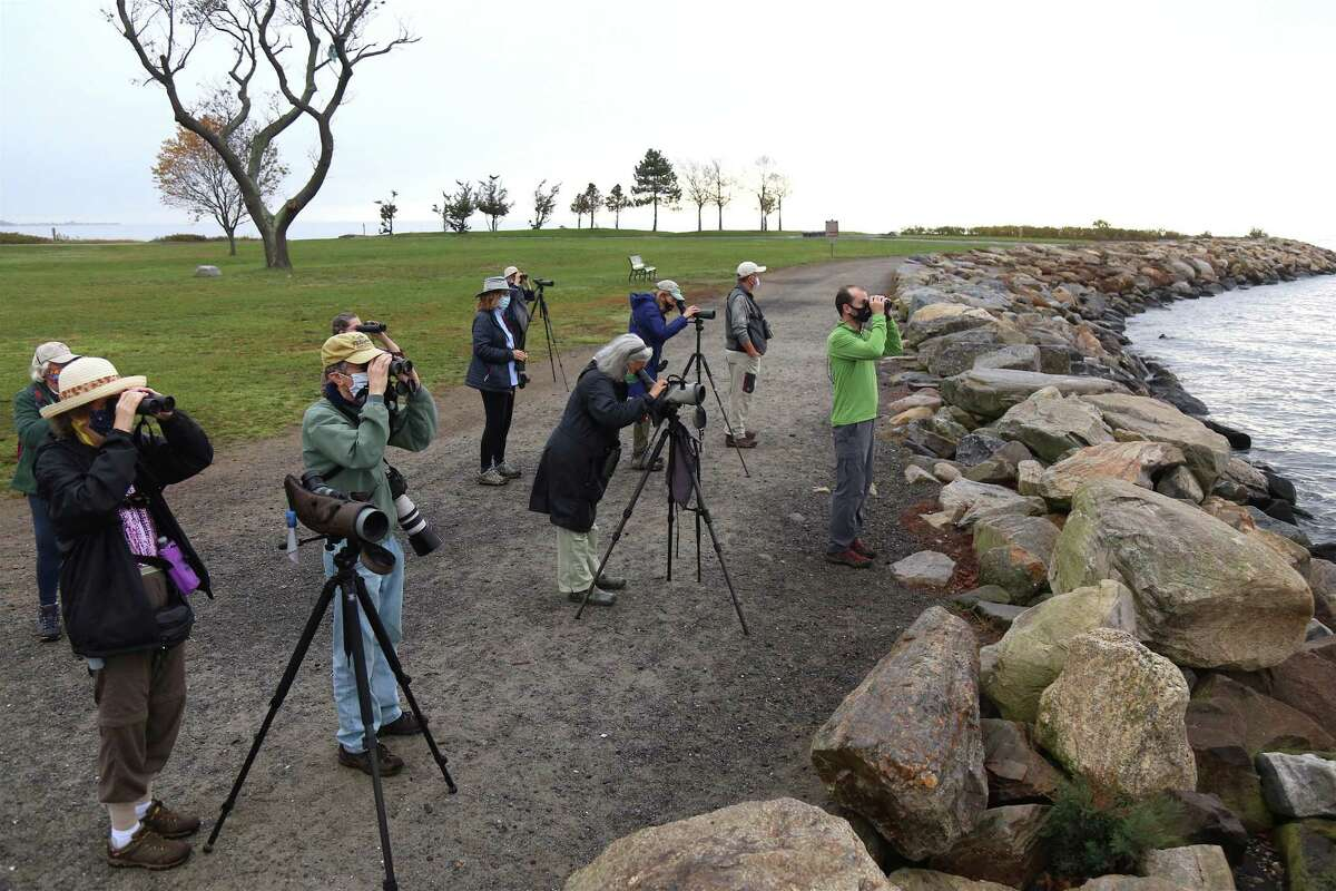 Birders look for birds out on the water at Sherwood Island State Park on Wednesday, Nov. 11, 2020, in Westport, Conn.