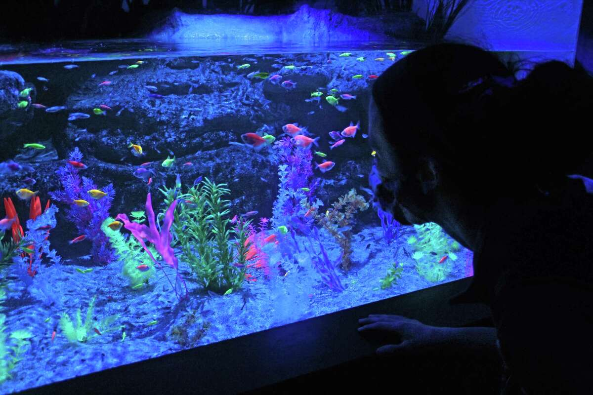 """Tetras and zebrafish are part of """"Living Lights,"""" a new exhibit at the Maritime Aquarium at Norwalk."""
