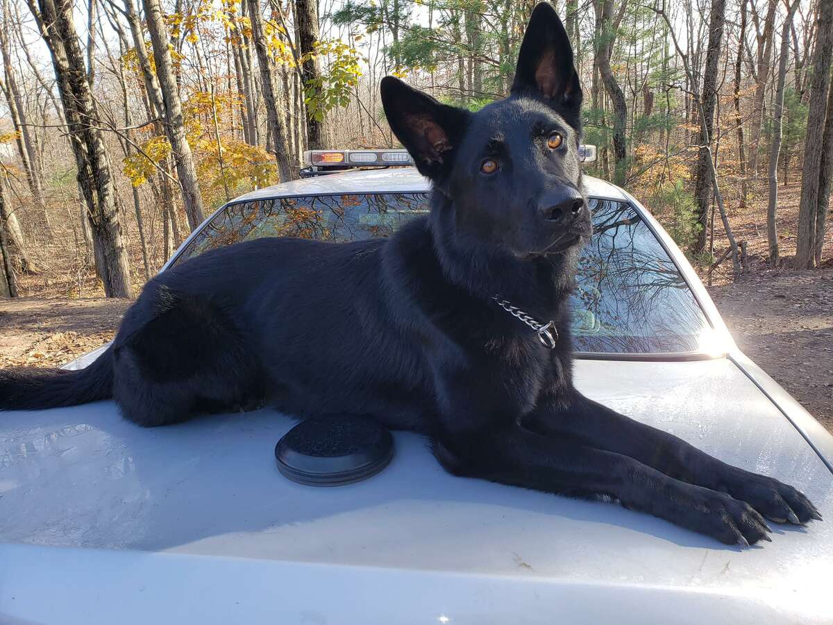 Connecticut State Police K-9 Brocko.