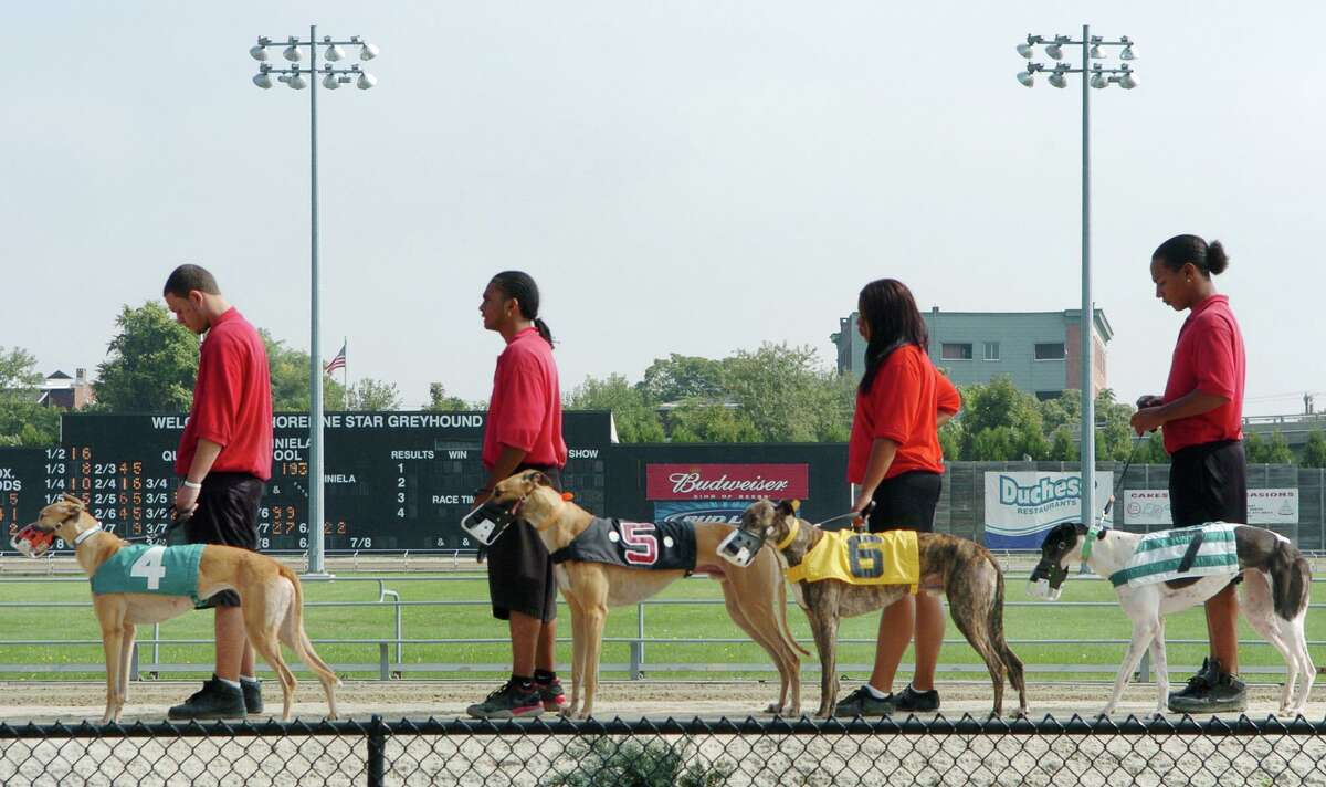 """FILE PHOTO 10/5/05 SHORELINE STAR BRIDGEPORT 1: The """"lead-outs"""" brought the racing dogs onto the track for the betting crowd to view just prior to a race at Shoreline Star in Bridgeport."""