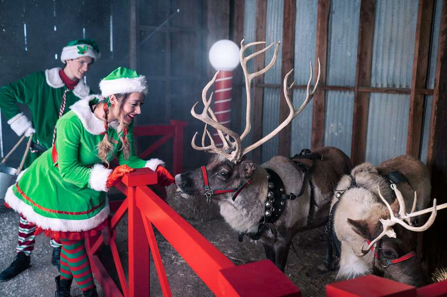 Elves Dimples, left, and Pickles check in on the reindeer. Photo: Santa Experience / Contributed Photo