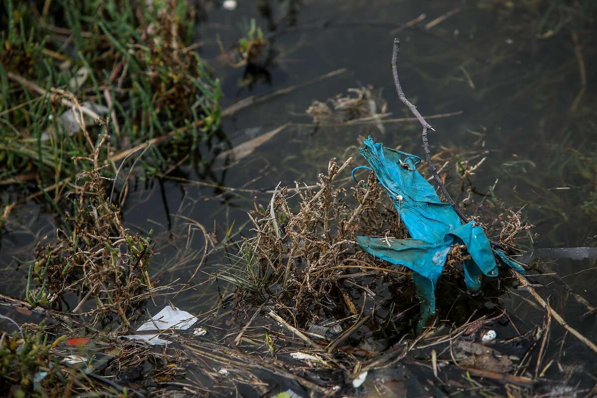A disposable glove in Damon Slough is part of a flood of personal protective equipment washing into waterways.