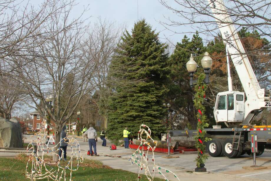 The Department of Public Works erected Manistee's 2020 Christmas tree near the the Marina Building on Thursday. Photo: Erin Glynn/News Advocate