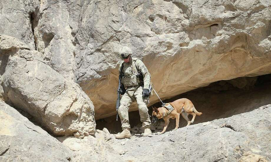Dogs have been used by armies around the world for centuries. Photo: Scott Olson / Getty Images / 2014 Getty Images