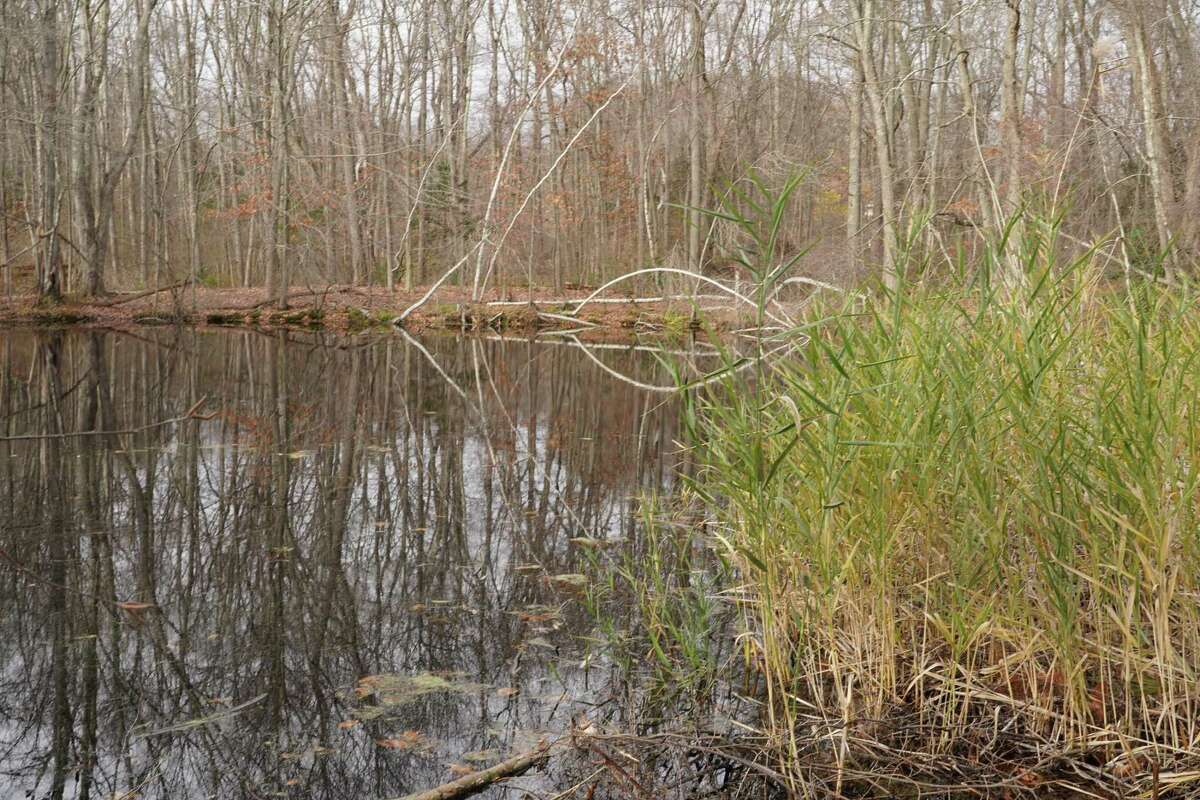The New Canaan Nature Center has received a 84-page report on how to improve the vegetation and animal habitats at the 39-acre park on 144 Oenoke Ridge.