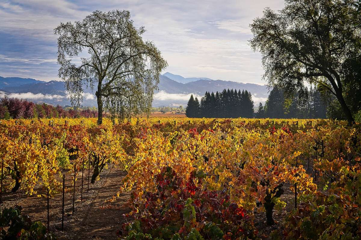 Trentadue Winery's vineyards look beautiful with fall color in Geyserville, Calif., on Nov. 15, 2020.