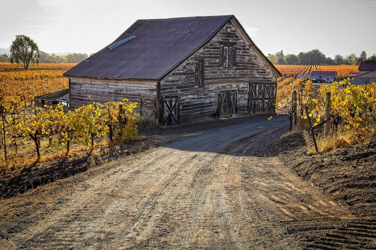Vines surround a historic barn on Westside Road in Dry Creek Valley in Sonoma County with leaves turning colors Nov. 15, 2020.