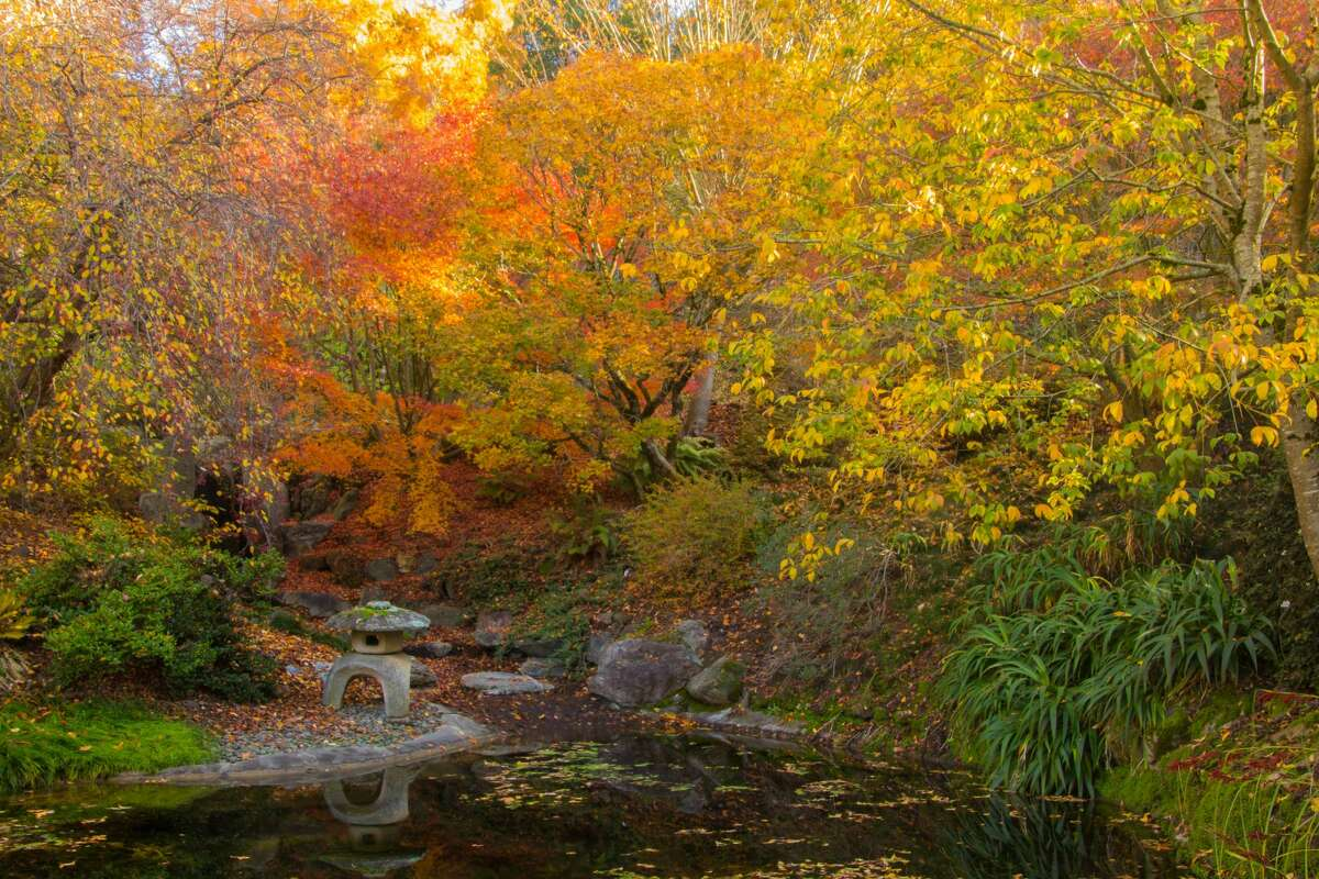 The UC Berkeley Botanical Garden provides some of the best fall colors in the San Francisco Bay Area.