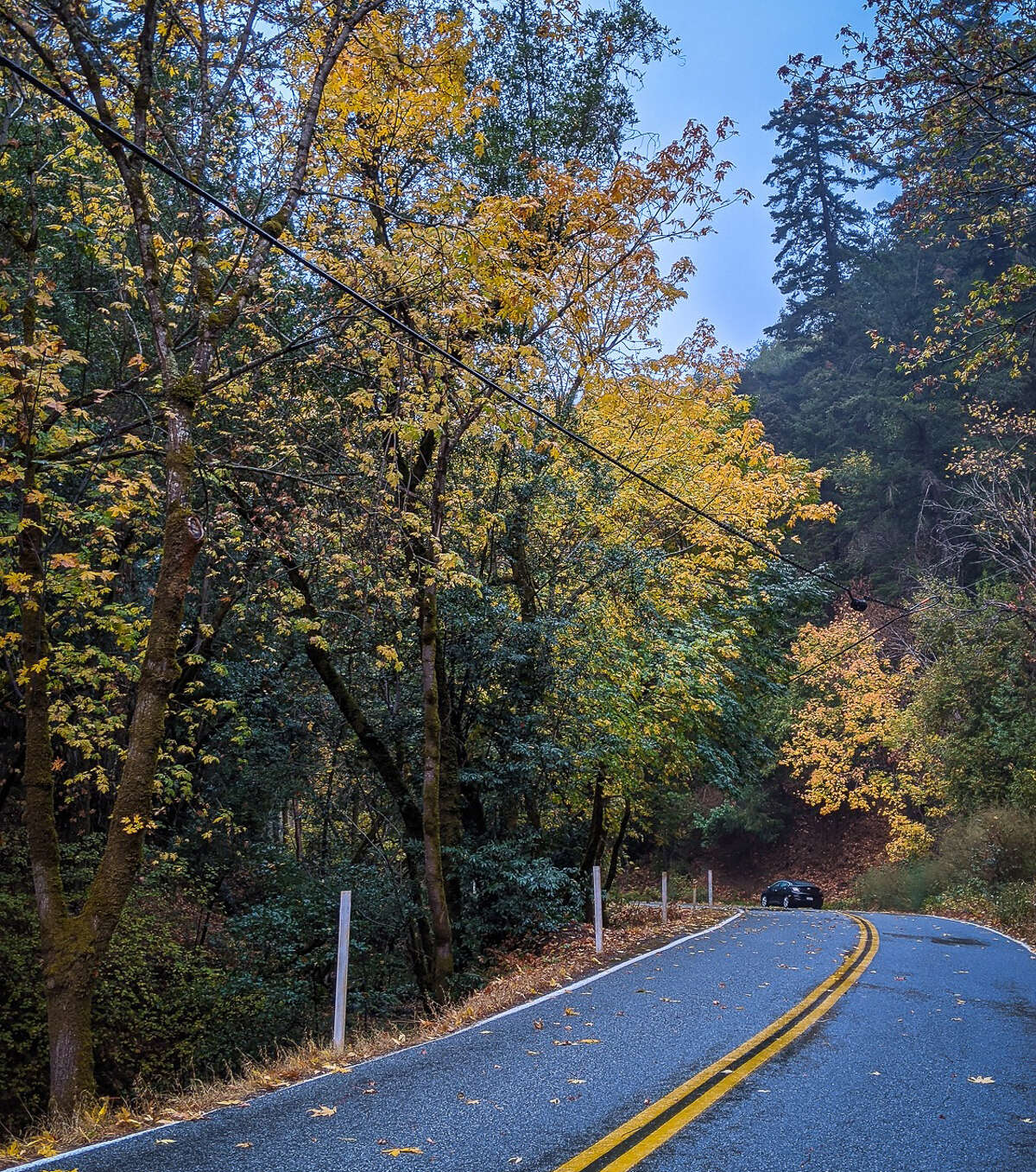 Vishal Mishra founds some beautiful fall foliage along Stevens Canyon Road in Cupertino on Nov. 13, 2020.